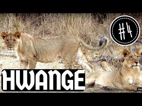 Hwange National Park: nuestro primer safari! 🐒🐆🦅🐃🐗🐘🐦🐊 | Zimbabwe y Botswana #4