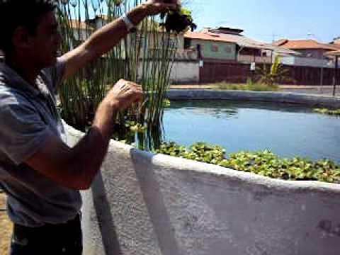 Filmagem sobre produ o de tilapias com ferrocimento youtube for Tanques para cria de tilapia