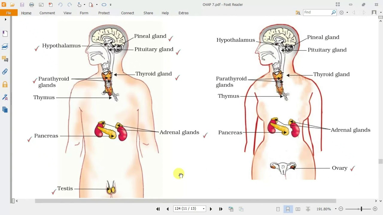 Hormones In Animals Class X Chapter 7 Part 4 Youtube