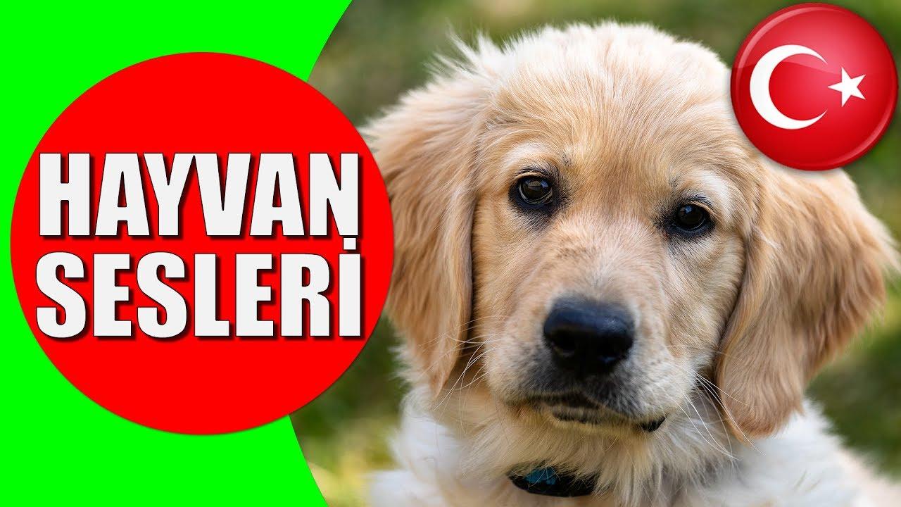 Hayvanlar ve Hayvan Sesleri - Çocuklar ve Bebekler için Türkçe Okul Öncesi Eğitici Video