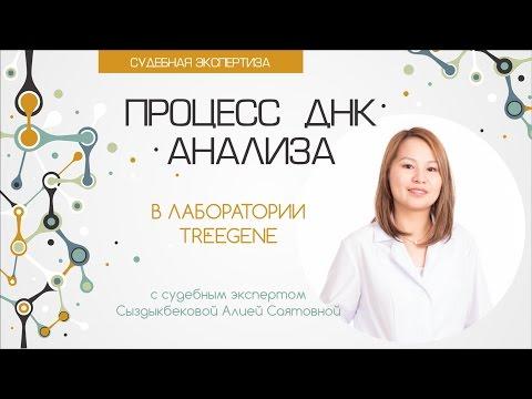 видео: Судебная Экспертиза: Процесс ДНК анализа
