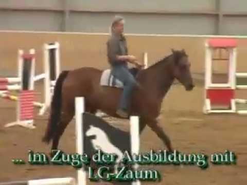 LG-Zaum Glücksrad gebisslos reiten Quarter Horse
