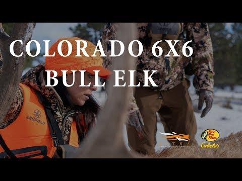 Colorado 6x6 Bull Elk - Riza