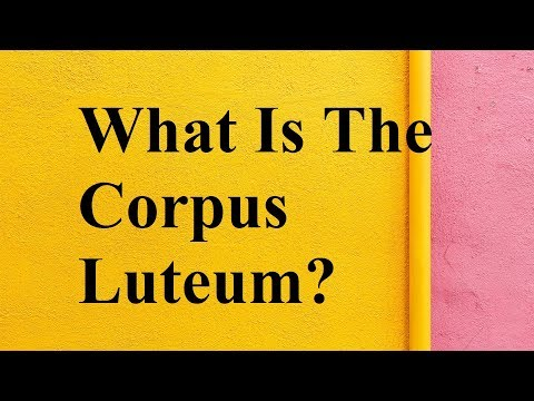 What is the Corpus Luteum?