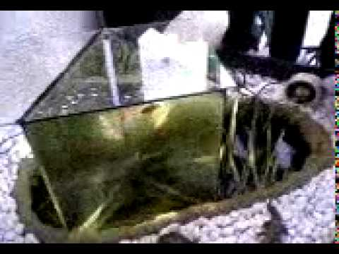 Aussichtsturm f r fische mov doovi for Goldfische im miniteich