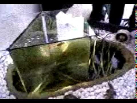 mfds2 aquarium auf dem kopf aussichtsturm f r fische. Black Bedroom Furniture Sets. Home Design Ideas
