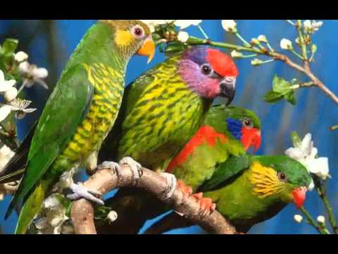 Parrot High Resolution –  Images