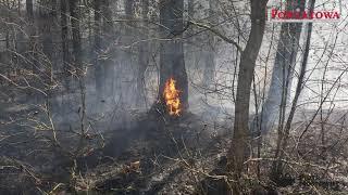 23.04.2019  Pożar lasu w Sikorach