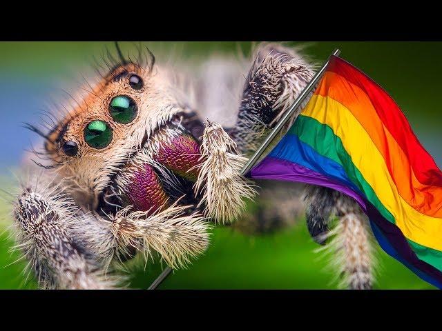 SOY HOMOFOBICO A LAS ARAÑAS