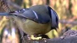 Linturuokintaa joulukuussa Suomessa Birds on Stamps
