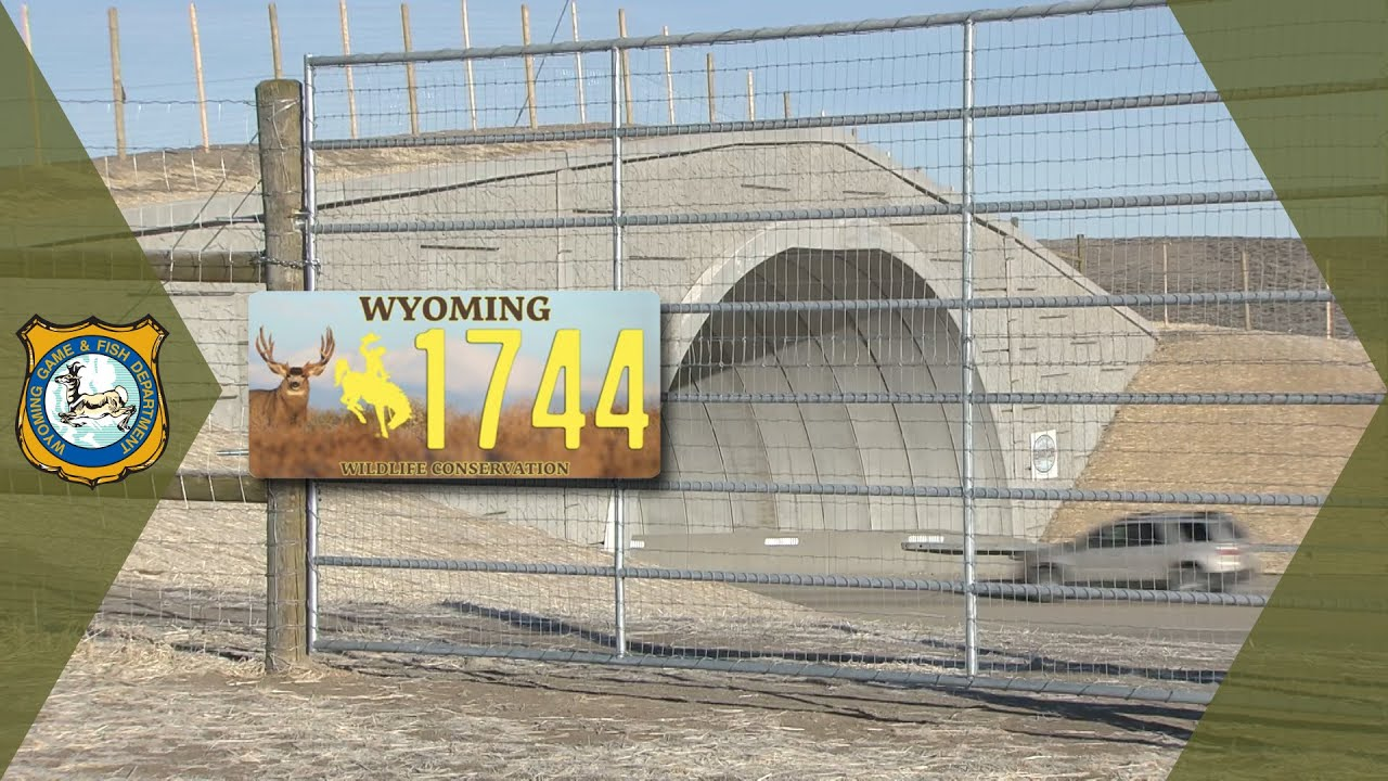 Wyoming's Wildlife Conservation License Plate