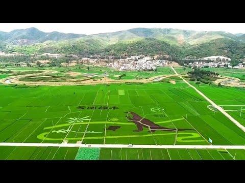 شاهد: ديناصور عملاق في حقول الأرز الصينية يستقطب الزوار…  - نشر قبل 2 ساعة