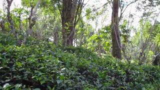 видео Как мы в Китай за чаем ходили. Часть 2.