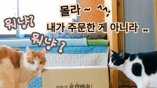 100화- 고양이들에게 온 택배~ 최애 간식?   병아…