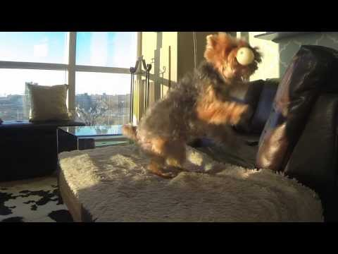 dog-playing-fetch-missing-funny-video