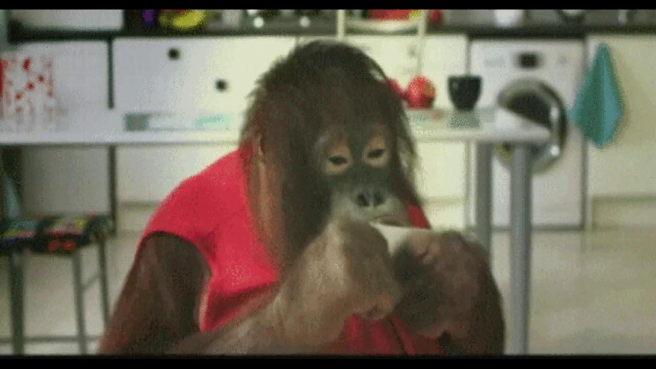гиф обезьяны прикольные предлагаем широкий