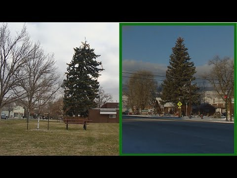 Westminster and Kremmling have a growing debate over whose Christmas tree is taller