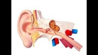 Trąbka słuchowa (trąbka, przewód Eustachiusza)
