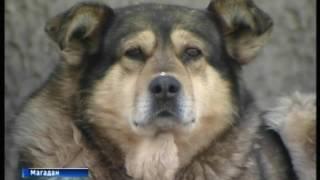 Тема безнадзорных собак: итоги недели