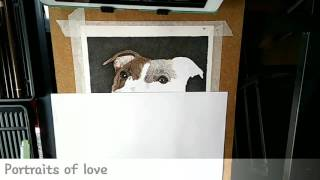 How to Draw a Staffy in colour