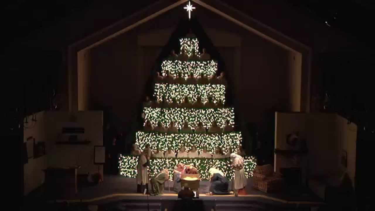 Ashland Christmas Trees.The Living Christmas Tree