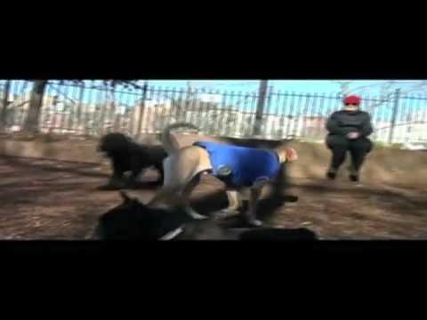 The Woofer - The Bark Side: 2012 Volkswagen Game Day Super Bowl Commercial