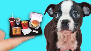 Making Tiny Foods for a Tiny Rescue Dog 🍟🐶 McDonalds mini 🍔