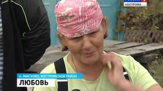 В Костромском районе работает первое предприятие по промышленному выращиванию клюквы(, 2015-09-25T15:47:07.000Z)