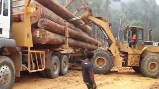 Truck Logging MAN TGS 40.440 6x6 dengan Kerja sama team di Medan berat.