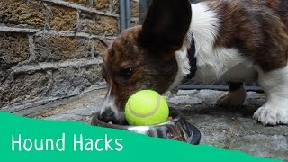 Hound Hacks: Tip 8 - How To Train Your Dog To Eat More Slowly