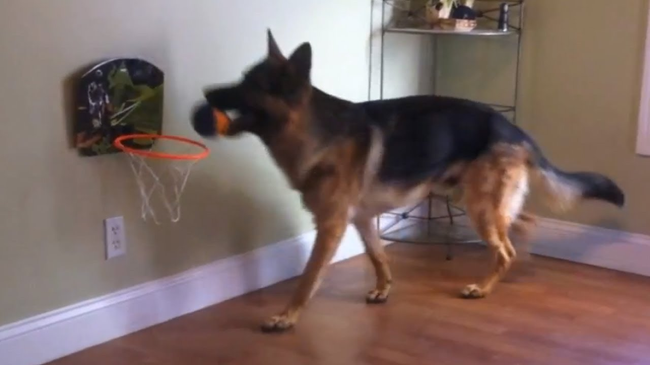 how to stop your dog from growling when playing
