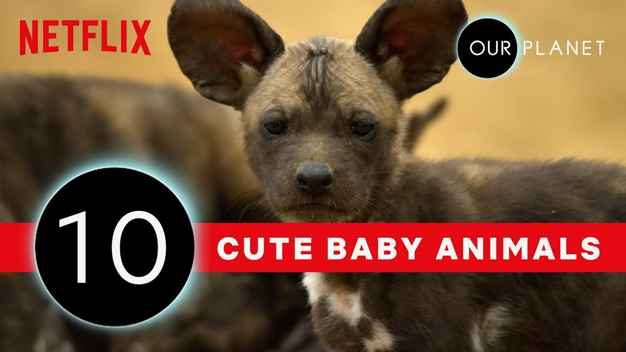 Cutest Baby Animals From Our Planet ? | Netflix