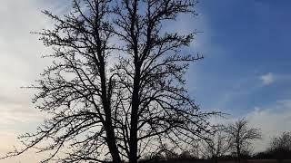 Осень 2020. Тёплый сезон. Деревенская природа. Как снимает Samsung A51.