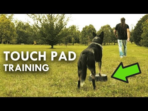 Touch Pad Training To Improve Focus And Agility