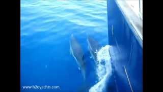 Яхтенный чартер | аренда яхт | ww.h2oyachts.com(Видео дельфинов, снятое с нашей яхты во время флотилии Н2О Yachts на Сицилии. Аренда яхт Sunsail с H2O Yachts в Италии..., 2015-03-16T07:35:48.000Z)