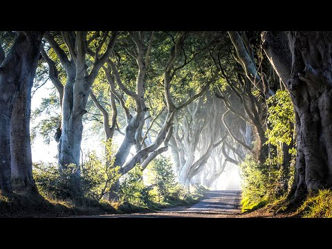 Ireland - The Road Not Taken