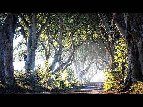 Ireland - The Road Not Taken
