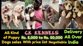 Dog for Sales | All Puppies Available | Delivery All Over India