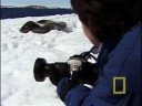Studying Leopard Seals