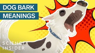 What Different Dog Barks Mean