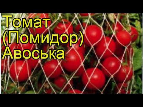 Томат обыкновенный Авоська. Краткий обзор, описание характеристик, где купить семена