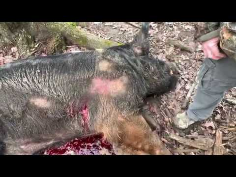GRAPHIC Wild Boar Hunt With A Custom Made Knife (No Dogs)