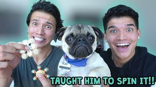 6 CRAZY FIDGET SPINNERS VS. PUG PUPPY!!