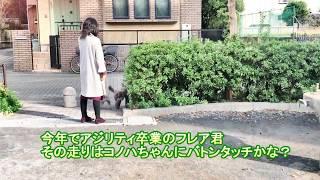ライフ・ウィズ・ドッグ スピリチュアルカウンセラー松本悠里さん