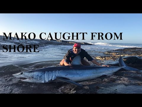FISHERMAN ENCOUNTERS RARE SHARK SPECIES FROM SHORE! || MAKO SHARK