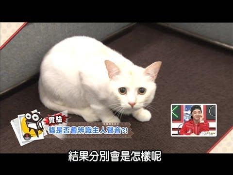 貓咪聰明到能分辨主人呼叫的聲音?