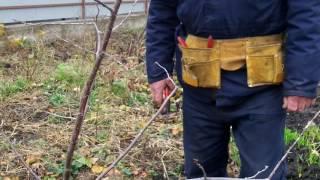 Урок 5.Потрясающий урок обрезки сада. Весна, лето , осень. ПОДПИШИСЬ!