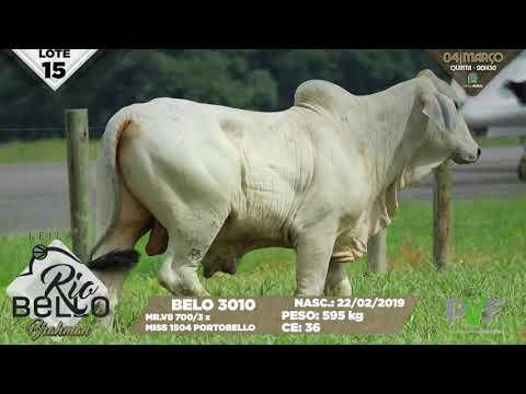 LOTE 15   BELO 3010