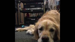 Quick Lick:  Heavy Metal Dog