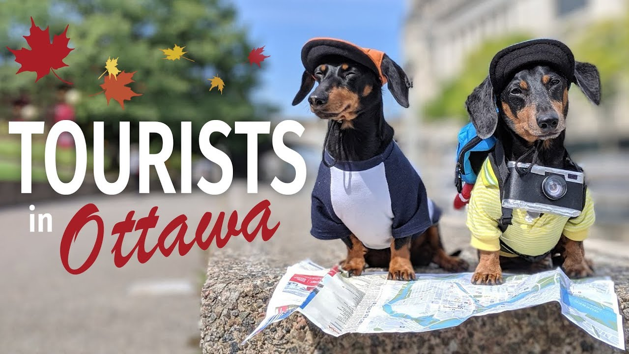 Download Ep #2: Crusoe & Oakley are TOURISTS in Ottawa! - (Cute & Funny Dog Travel Video)